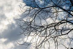 Naakte takken van boom tegen de hemel royalty-vrije stock afbeeldingen