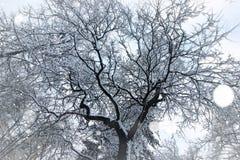 Naakte takken van de winterbomen royalty-vrije stock foto's