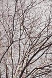 Naakte takken van een boom tegen blauwe hemel Royalty-vrije Stock Foto's