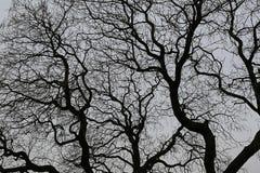 Naakte takken van een boom tegen de donkere hemel stock afbeeldingen