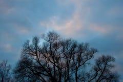 Naakte takken van een mooie boom tegen de hemel royalty-vrije stock foto's