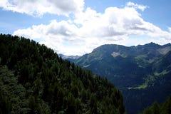 Naald bomen op berg stock foto