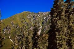 Naald bos in de bergen Stock Afbeeldingen