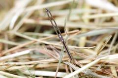 Naald in een hooiberg Stock Foto
