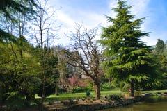 Naaldbomen door het meer royalty-vrije stock afbeelding