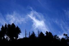Naaldboom bossilhouet Royalty-vrije Stock Afbeeldingen