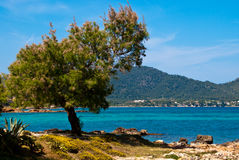 Naaldboom op het strand van de Middellandse Zee Royalty-vrije Stock Foto