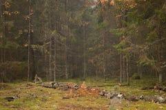 naaldbos, landschap, open plek, mos, bomen royalty-vrije stock afbeeldingen