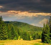Naaldbos op een berghelling bij zonsondergang Royalty-vrije Stock Afbeeldingen