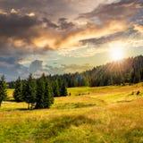Naaldbos op een berghelling bij zonsondergang Royalty-vrije Stock Fotografie