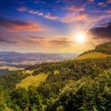 Naaldbos op een berghelling bij zonsondergang Stock Afbeelding