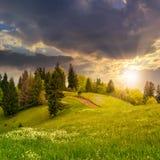Naaldbos op een berghelling bij zonsondergang Royalty-vrije Stock Foto