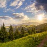 Naaldbos op een bergspoeling bij zonsondergang Royalty-vrije Stock Fotografie
