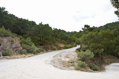 Naaldbos, Pine forest. Naaldbos op Lesbos; Pine forest on Lesvos stock photo