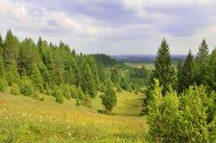 Naaldbossen en de dag van de wolkenzomer stock foto