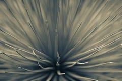 Naalden en stammen van cactus toning Royalty-vrije Stock Fotografie