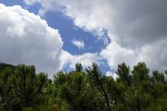 Naaldstruiken op de achtergrond van een bewolkte hemel met een blauw schijnsel royalty-vrije stock afbeeldingen