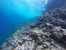 Naaldvissen Coral Reef Royalty-vrije Stock Afbeeldingen