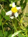Naamloze vlinder royalty-vrije stock afbeelding