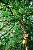 Naar huis Gemaakt Houten Vogelshuis in Groene Boom stock foto