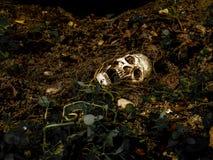 Naast van menselijke die schedel in de grond met de wortels van de boom aan de kant wordt begraven De schedel heeft vuil in bijla Royalty-vrije Stock Fotografie
