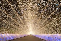 Nabana ingen Sato trädgård på natten Nagoya Arkivfoto