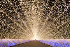 Nabana ingen Sato trädgård på natten Nagoya Royaltyfri Bild