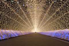 Nabana ingen Sato trädgård på natten Nagoya Royaltyfria Foton