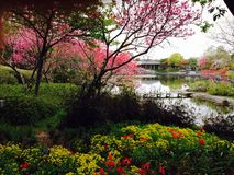 Nabana No Sato. Spring  in Kuwana, Japan Royalty Free Stock Photography