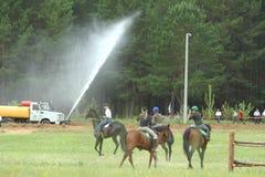 Naberezhnye Chelny,俄罗斯- 2006年6月06日:赛马在喂 库存图片