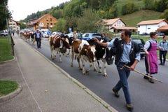 Nabiał krowy Shepards prowadzenie parada w Szwajcaria fotografia stock