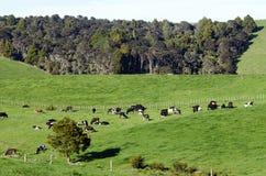 Nabiału gospodarstwo rolne obraz royalty free