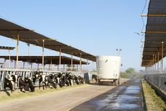 Nabiału pustynny gospodarstwo rolne: forage dystrybucja Obraz Stock