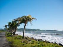 Nabrzeżna droga wykładał z drzewkami palmowymi, przegapia tropikalnego ocean, Puerto Rico, usa obraz stock