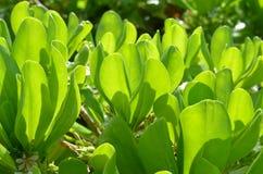 Nabrzeżna zieleń Fotografia Stock