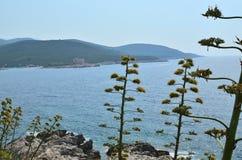 Nabrzeżne rośliny i morze Zdjęcia Stock