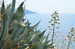 Nabrzeżne rośliny i morze Fotografia Royalty Free