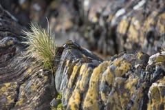 Nabrzeżne rośliny i skały Obrazy Royalty Free