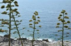 Nabrzeżne rośliny i woda morska Obraz Stock