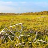 Nabrzeżni preria krajobrazu błota zdjęcia royalty free