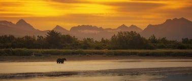 Nabrzeżny brown niedźwiedź Zdjęcia Royalty Free