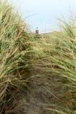 Nabrzeżna trawa i latarnia morska Zdjęcie Stock