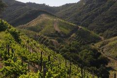 Nabrzeżna wytwórnia win z widokiem ocean Obrazy Stock