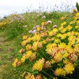 Nabrzeżne flory Zdjęcia Royalty Free