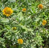 Nabrzeżni kwiaty Obrazy Royalty Free