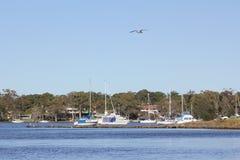 nabrzeżny jeziorny macquarie Obrazy Stock