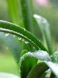 Nach dem Regen lizenzfreie stockbilder