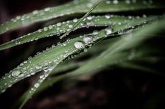 Nach dem Regen stockbilder