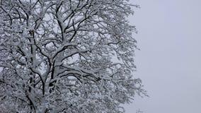 Nach dem Schneesturm stockbild