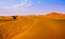 Nach dem Wüstenregen Stockfotos
